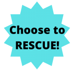 choose to rescue small dogs that stay small