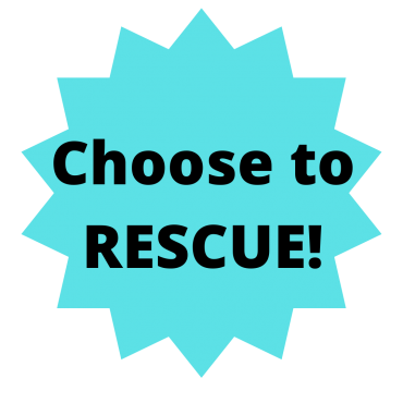Yorkie Poo rescue, choose to rescue