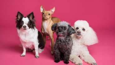 Best small dogs for kids, best family dog breeds