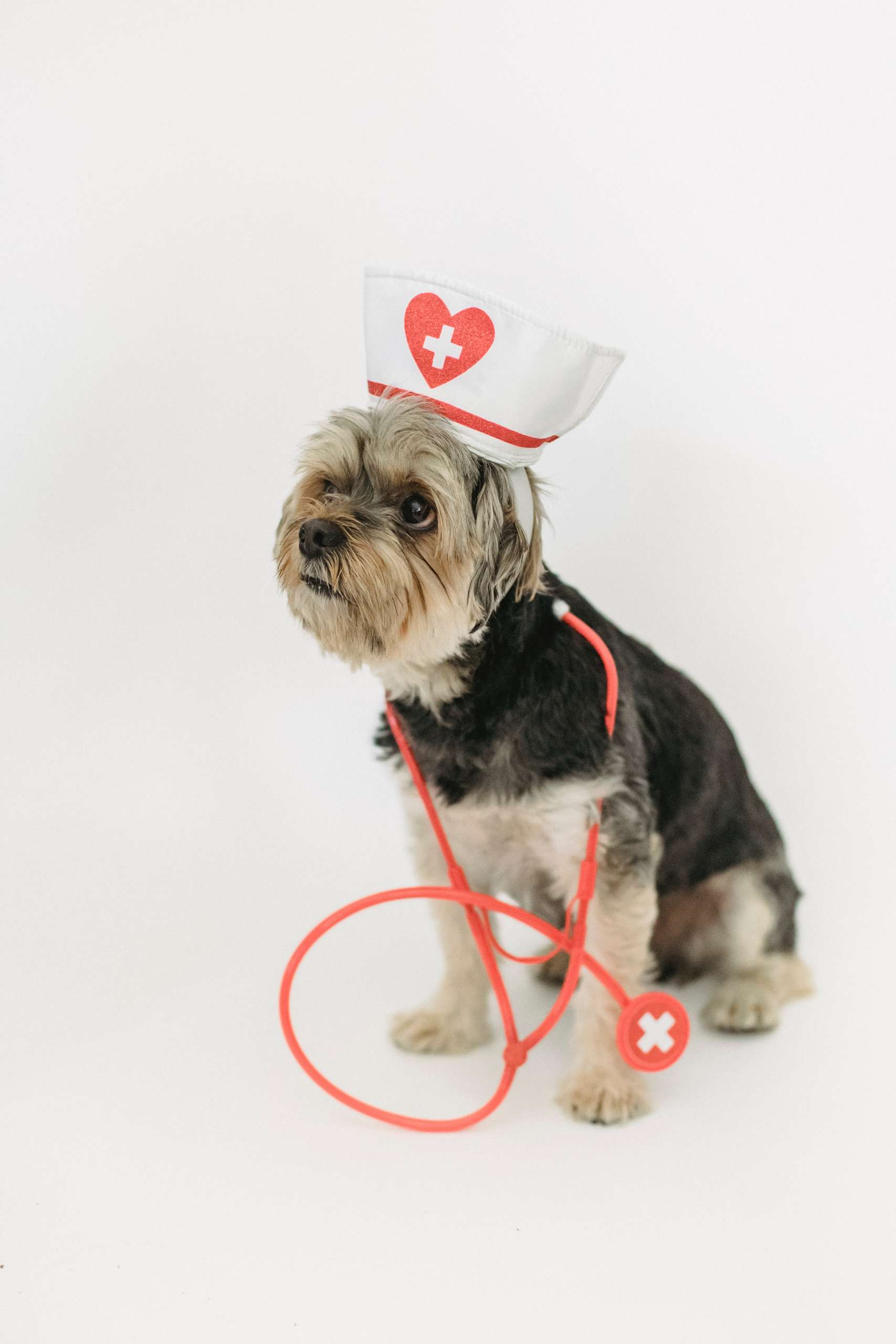 What to Expect After Neutering Your Dog